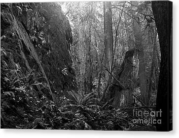 Canvas Print featuring the photograph Rainforest Black And White by Sharon Talson