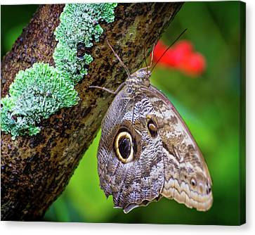 Rainforest Butterfly Canvas Print