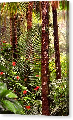 Rainforest Palms And Hibiscus Canvas Print by Thomas R Fletcher