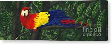 Rainforest Parrot Canvas Print
