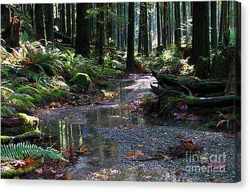 Canvas Print featuring the photograph Rainforest Trail 2 by Sharon Talson