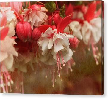 Flowerrs Canvas Print - Raining Fuchsia by Susan Capuano