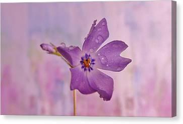 Raining Violet Canvas Print