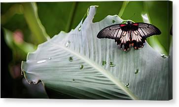 Raining Wings Canvas Print by Karen Wiles