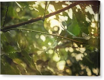 Rainy Autumn Leaves Canvas Print by Thubakabra