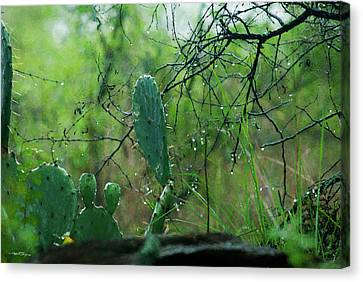 Rainy Day In Central Texas Canvas Print
