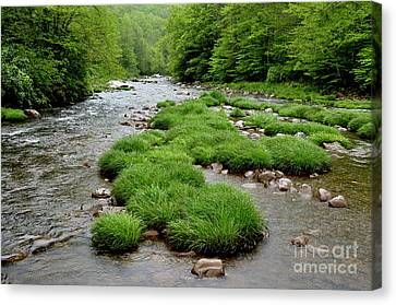 Williams River Canvas Print - Rainy Day On Williams River  by Thomas R Fletcher