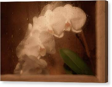 Raindrop Canvas Print - Rainy Day Orchid by Tom Mc Nemar
