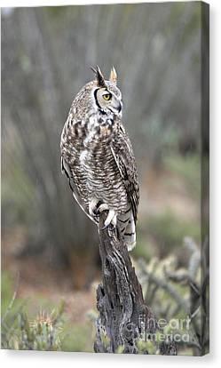 Rainy Day Owl Canvas Print
