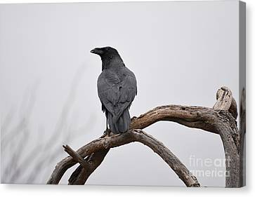 Rainy Day Raven Canvas Print
