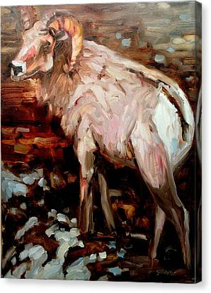 RAM Canvas Print by Brian Simons