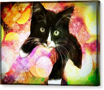 Rama The Miracle Cat Canvas Print