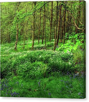 Landscapes Canvas Print - Ramsons And Bluebells, Bentley Woods by John Edwards