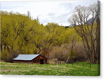 Ranch Shed Under Springtime Trees Canvas Print by Kae Cheatham