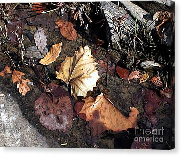 Random Leaves At Richland Ceek Canvas Print by Steve Grisham