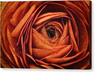 Ranonkel Oranje Canvas Print by Rick Berk