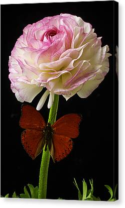 Ranunculus And Red Butterfly Canvas Print by Garry Gay