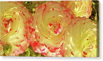 Ranunculus Group Canvas Print by Ben and Raisa Gertsberg