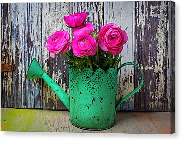 Ranunculus In Green Watering Can Canvas Print by Garry Gay