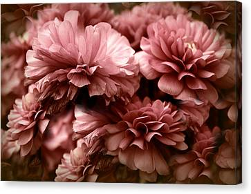 Ranunculus Petal Play Canvas Print by Jessica Jenney