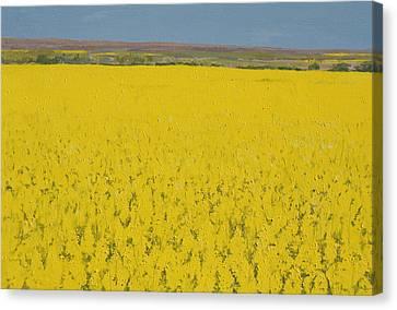 Rape Field Canvas Print by Alan Byrne
