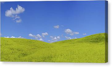 Rapeseed Landscape Canvas Print by Marius Sipa