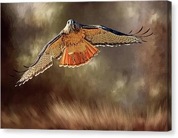 Hawk Canvas Print - Raptor by Donna Kennedy
