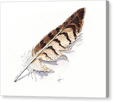 Raptor Feather Canvas Print