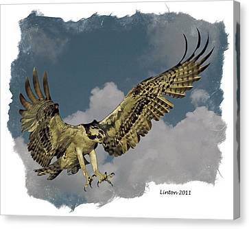 Raptor Canvas Print by Larry Linton