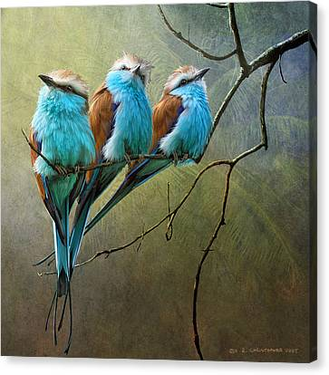 Raquet Tailed Rollers Canvas Print by R christopher Vest