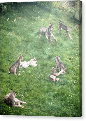Canvas Print featuring the photograph Play Together Prey Together by Tim Newton