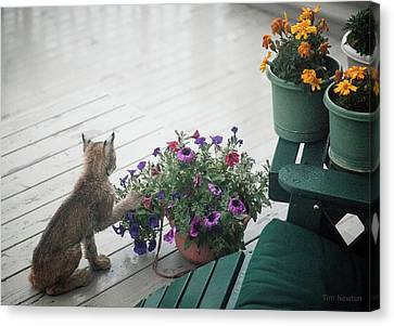 Canvas Print featuring the photograph Swat The Petunias by Tim Newton
