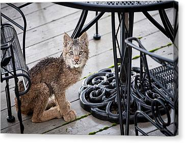 Canvas Print featuring the photograph Are You Looking At Me by Tim Newton