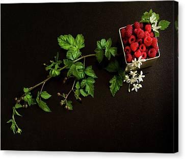 Raspberries On A Black Background Canvas Print