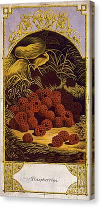 Raspberries Vintage Fruit Label Canvas Print by Edward Fielding