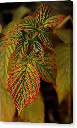 Raspberry Leaves Canvas Print