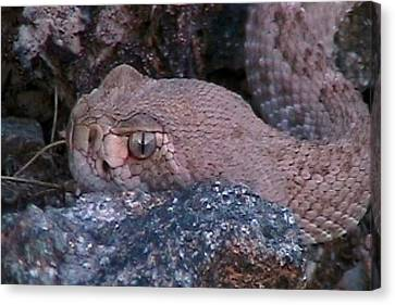 Rattlesnake Portrait Canvas Print