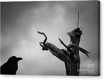 Raven And Shamanic Tree  Canvas Print by Dave Gordon