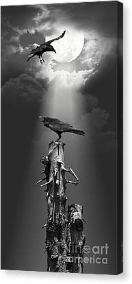 Raven At Night Under The Moonlight Canvas Print by Monika Juengling
