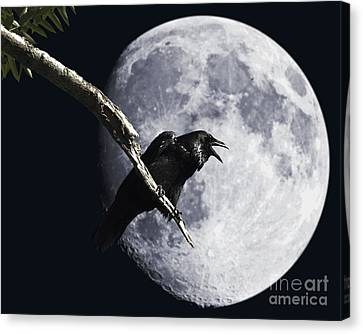 Raven Barking At The Moon Canvas Print by Wingsdomain Art and Photography
