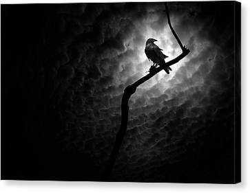 Raven, Death Valley Canvas Print by Marius Sipa