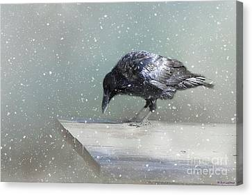 Raven In Winter Canvas Print by Eva Lechner