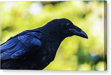 Canvas Print featuring the photograph Raven by Jonny D