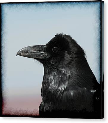 Raven Profile Canvas Print