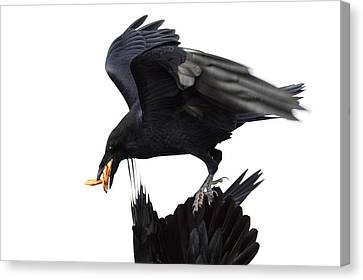 Canvas Print featuring the photograph Ravens by Jane Melgaard