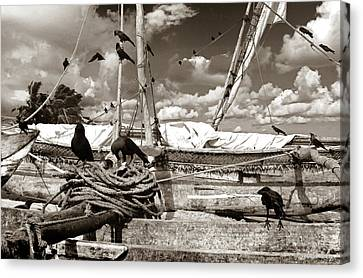 Ravens Canvas Print by Robert Lacy