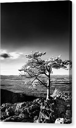 Canvas Print featuring the photograph Ravens Roost Ir Tree by Kevin Blackburn