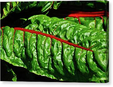 Canvas Print featuring the photograph Raw Food by Harry Spitz