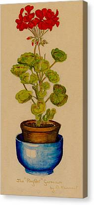 Canvas Print featuring the painting Ray-bet Geranium by Betty Hammant