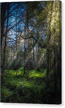 Rays Canvas Print by Marvin Spates